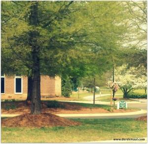 Trees at WFPC