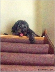 Scout watches from the stairs
