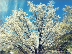 Spring is coming here in Wake Forest