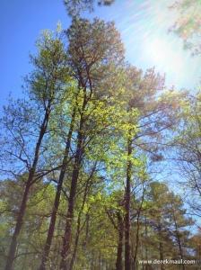 sunlight and fresh green