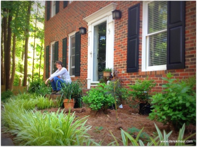 putting in the row of nandina