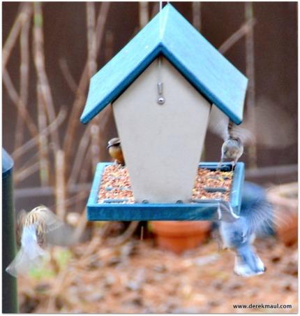 I love the wild flurry of landing birds!