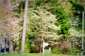 dogwoods, redbuds, and more