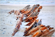 old shipwreck on Corolla