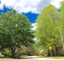Walking the neighborhood