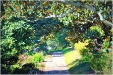 magnolia pathways