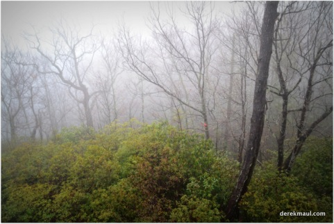 low clouds in the woods