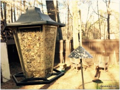 """expensive """"wild bird"""" food in the small feeder"""