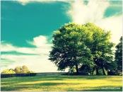 Tyler Run Park - We live in a beautiful world