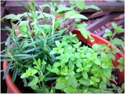 a few of my herbs