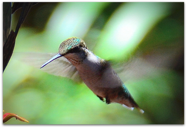 life, death, grace, rage, hummingbirds, and perspective…