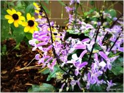 """""""Eclipse Plants"""""""
