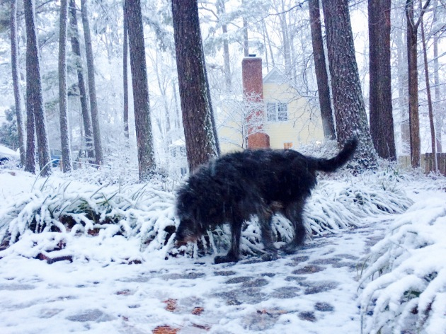 Scout in the snow