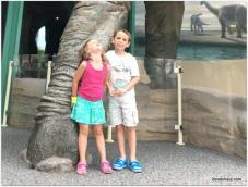 huge leg - Brontosaurus
