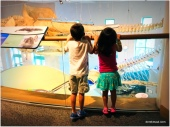admiring the whale bones