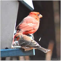 Cardinal and Finch