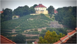 vineyards along the Elbe