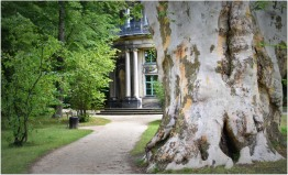"""huge tree with """"English Pavilion"""" behind"""