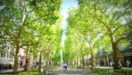 walking in Neustadt
