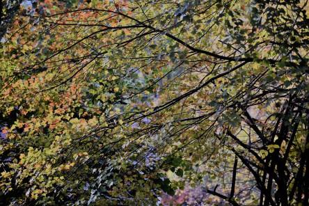 trees behind Maul-Hall