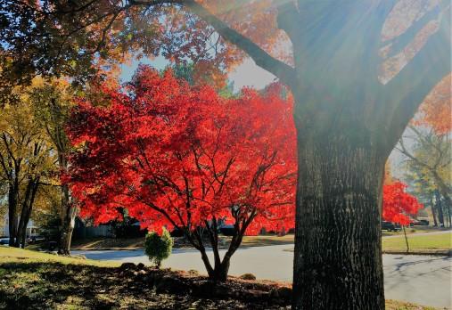 fall in our neighborhood