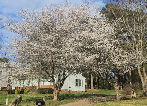 trees beginning to bloom