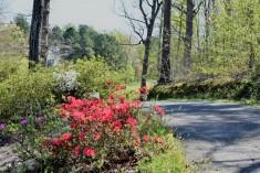 cart path - #3