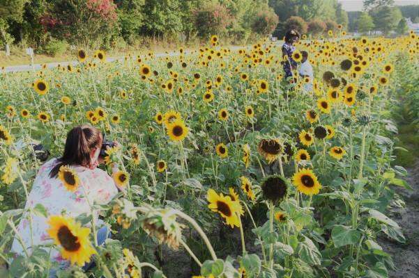 photographer capturing an engagement
