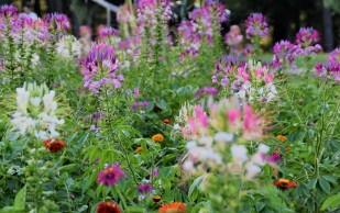 Wildflower borders